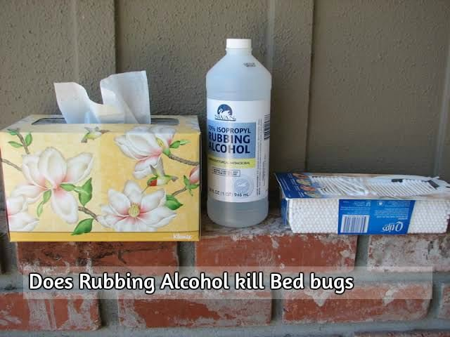 Does Rubbing Alcohol kill Bed bugs