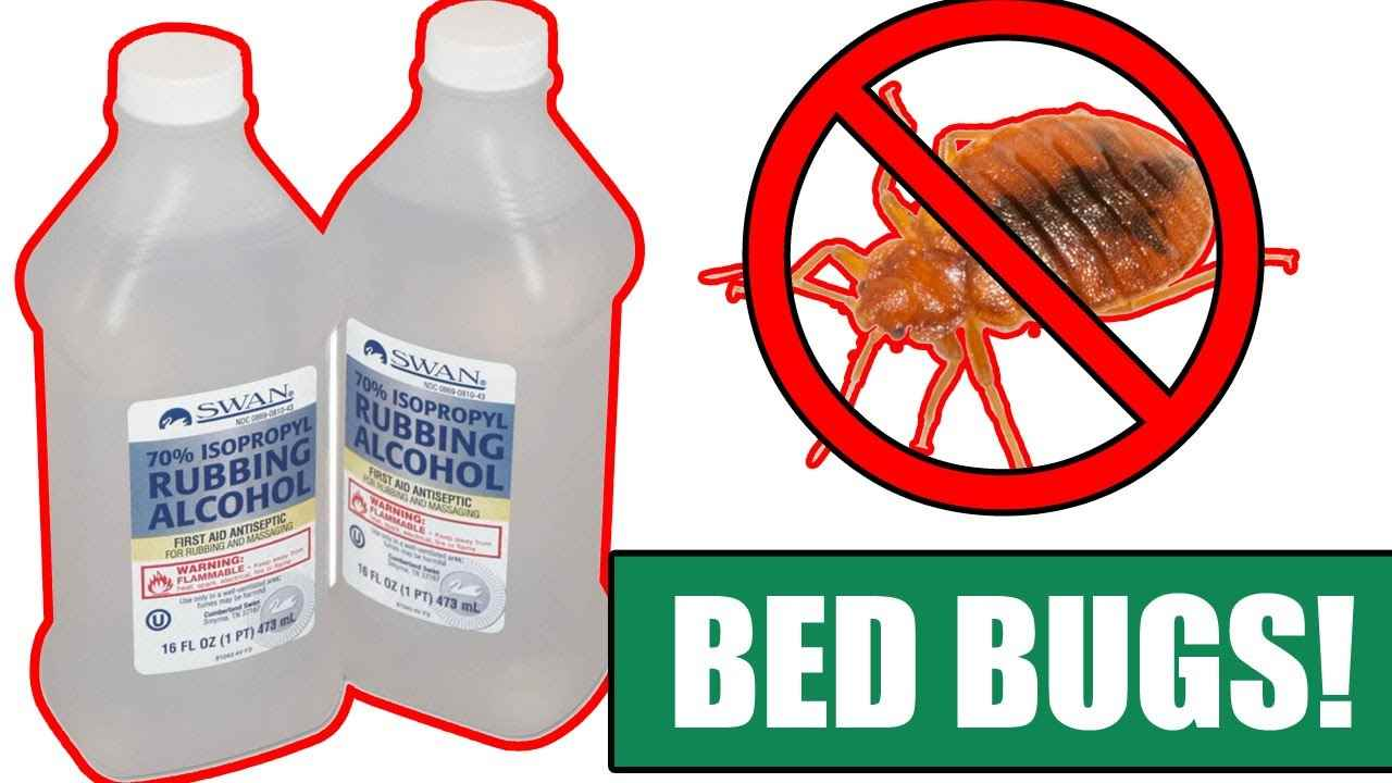 Rubbing Alcohol Kill Bed Bugs